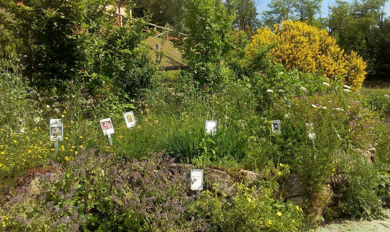 L'incanto del Giardino Botanico dei Colli Euganei