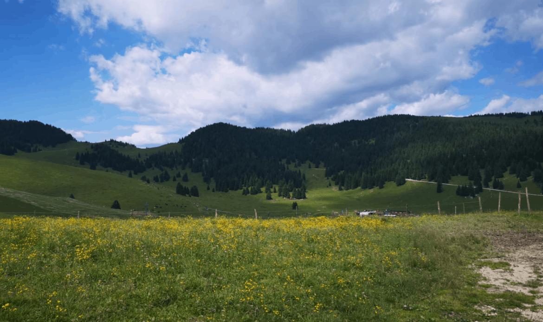 Consumo del suolo: +12,5% in Veneto Corazzari: già imposto lo stop al cemento