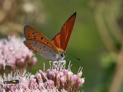 Sulle ali delle farfalle e il cielo d'autunno si riempie dell'ultima magia