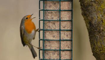 Una mangiatoia per gli uccellini che in inverno restano a farci compagnia