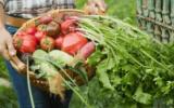 Agroalimentare veneto, andamento 2018: imprese in calo