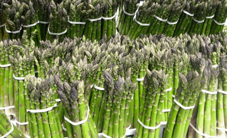 Maltempo: male il mais, salvi gli asparagi. Pedemontana: Avepa e Regione contano i danni
