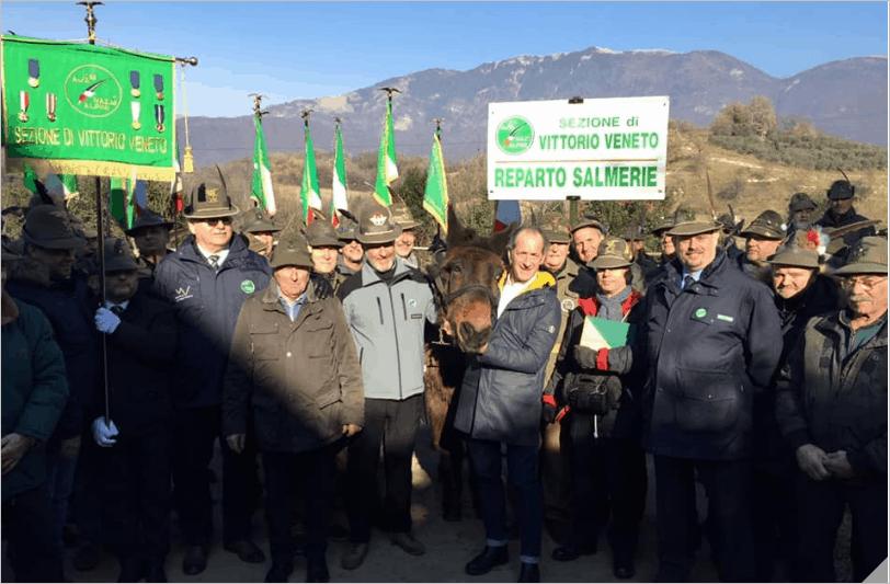 """Addio a Iroso, il mulo alpino più vecchio d'Italia. Zaia: """"Per sempre nei nostri cuori"""""""