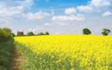 Sviluppo rurale: il Veneto ai primi posti in Europa per attuazione del programma