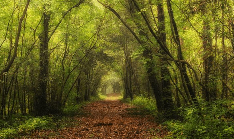 Chioggia, a Bosco Nordio la natura si fa arte