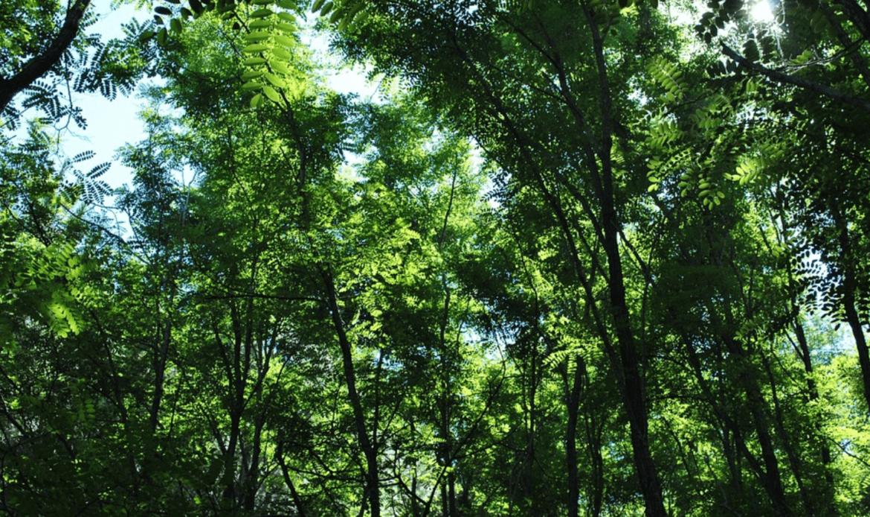 Ambiente, con gli alberi si può……