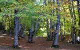 Nuovi boschi, un premio a chi aiuta a farli nascere
