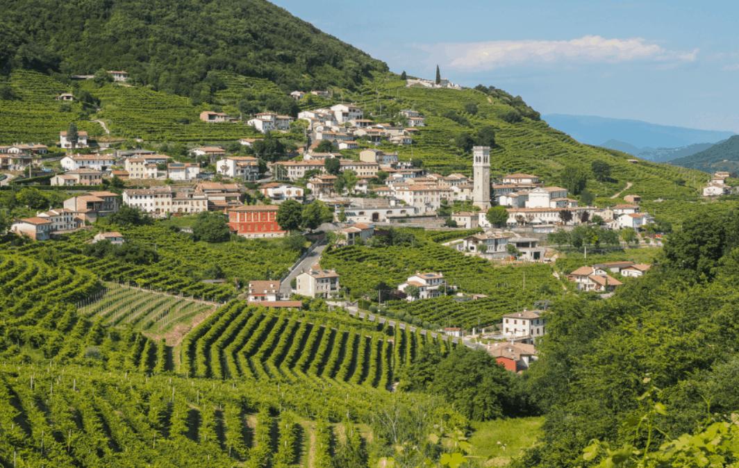 Veneto, cresce il vigneto. Pinot  e prosecco superstar