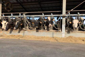 Guerra dei dazi, non fa bene al settore lattiero caseario