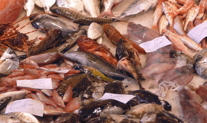 Pesca in Veneto: cresce il pesce azzurro, male le vongole