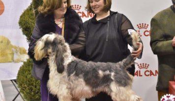 56 esima esposizione internazionale canina a Padova 11 e 12 gennaio