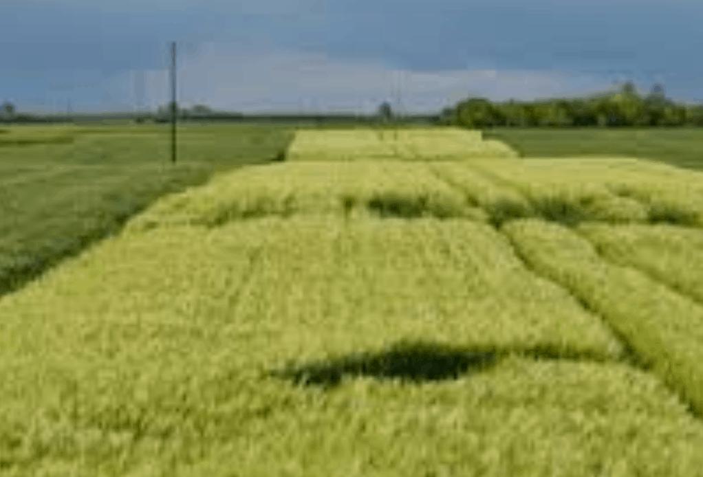 Agricoltura veneta, sfiorati i 6 miliardi di euro, ma attenzione ai contraccolpi di Covid-19
