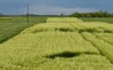 Agricoltura, alla ricerca del carbonio perduto