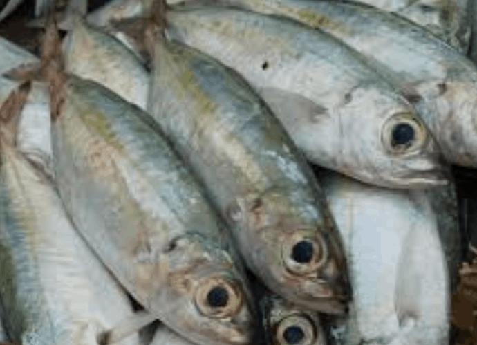 Covid-19, anche la pesca veneta getta l'ancora