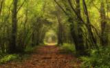 Bosco Nordio, prende il via la stagione di eventi nella straordinaria Riserva naturale