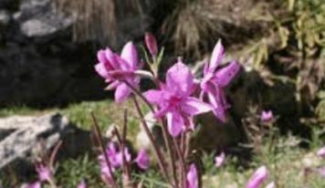 Estate in Cansiglio: aperti Giardino Botanico e MUC