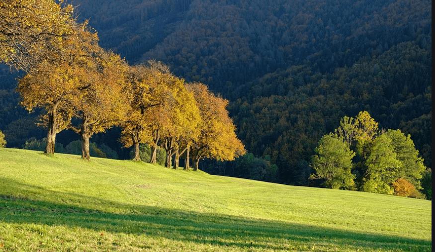 """Premio """"Jean Giono – l'uomo che piantava gli alberi"""""""