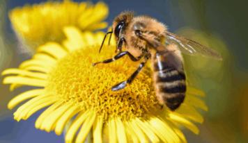 Dolomiti, 6 tipi di miele dai fiori del territorio