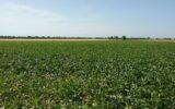 I giovani agricoltori protagonisti nella produzione di paesaggio